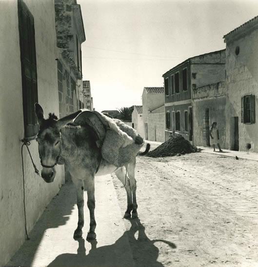 Donkey, Minorca – 1954