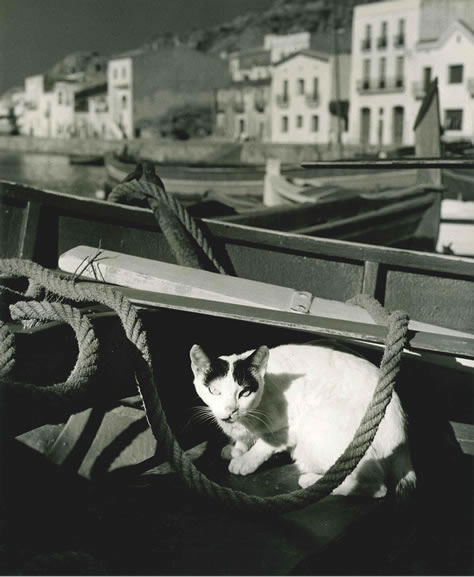 Cat on fishing boat, Costa Brava – 1955