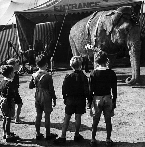 Boys with elephant – c.1948