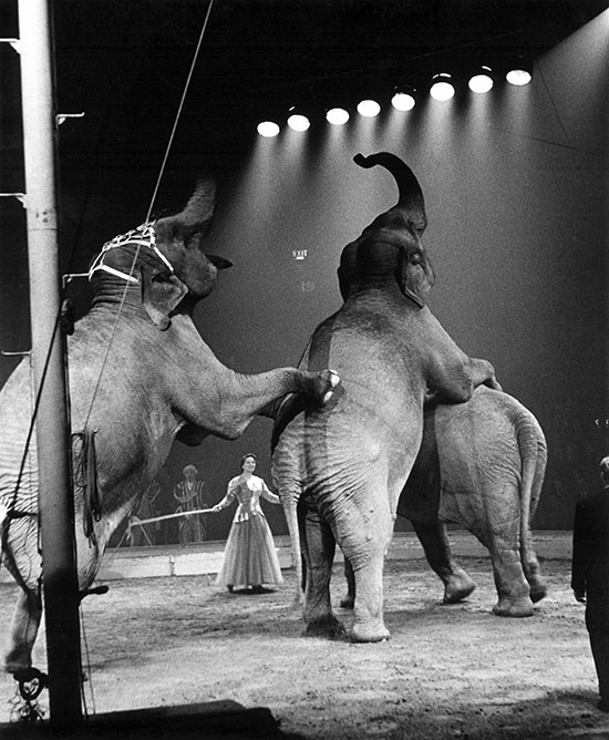 Elephants at the circus – c.1956