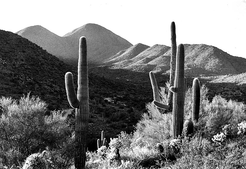 Cactus and hills – 1999